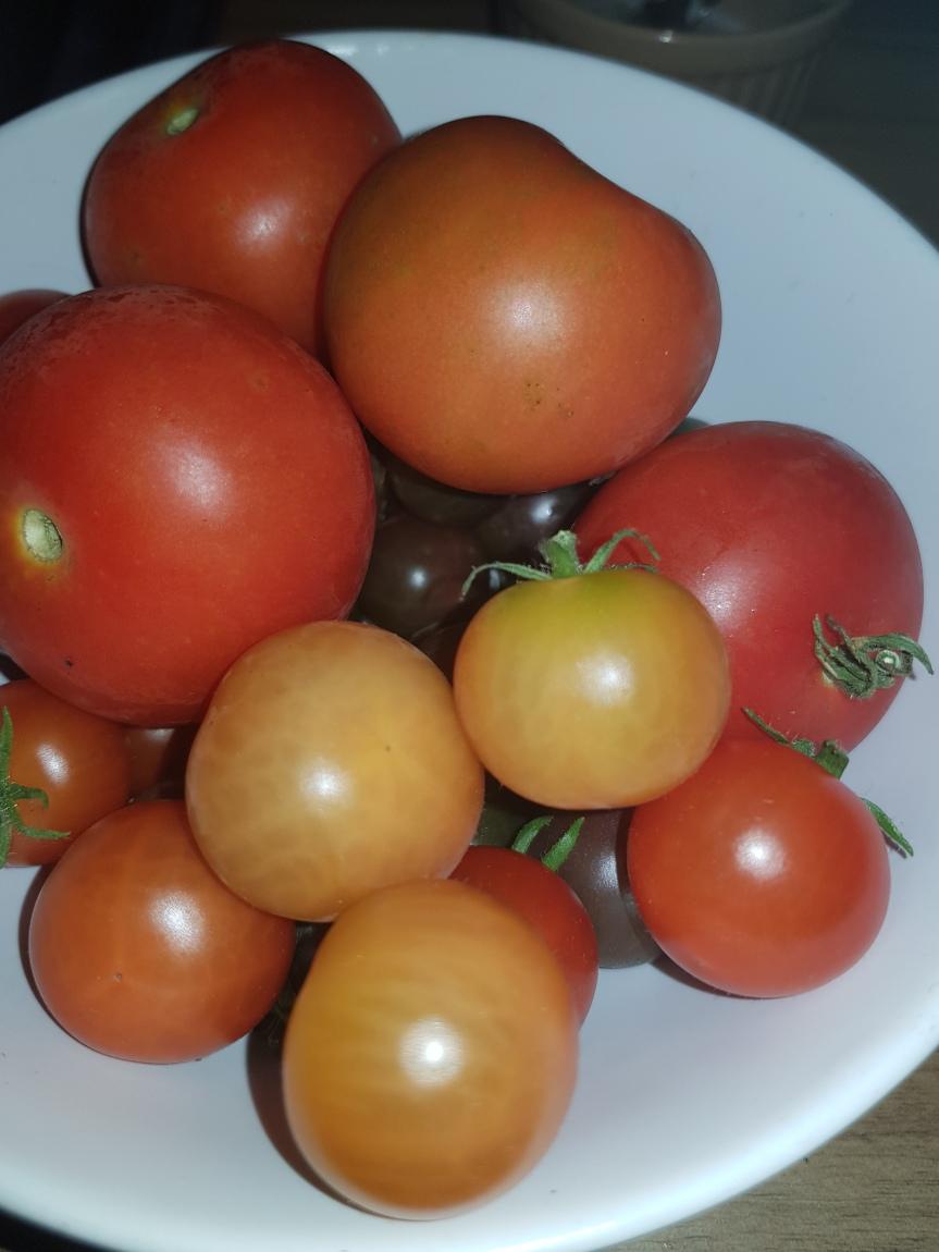 Farewell Tomato Plants